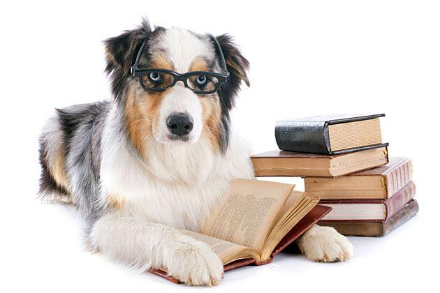 ontario dog groomers association - schools/links